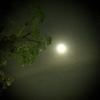 【今日は】ムーミンカメラの話【満月】