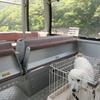 犬フレンドリーな谷川岳ロープウエイ