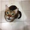 老猫を看取るということ:また、みんな一緒に暮らそうね。