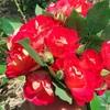 バラの花束で幸せが広がっている