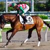 【7月のウマフリ】新種牡馬から引退馬、ドラクエまで!ウマフリ掲載5記事まとめ