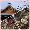 サクラ三様   〜春へ 前へ〜