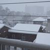 雪にやられた!