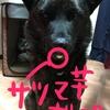 甲斐犬サンとドッグトレーナー(の卵)の巻〜(ㆀ˘・з・˘)免許マダ〜?
