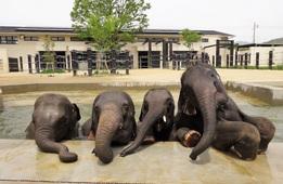 京都府内の動物園で見つけた!癒される動物フォト