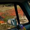 11月・・・紅葉の泰雲寺