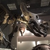上野の科学博物館に行ってきた
