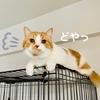 ケージクライミングのブーム到来。愛猫に危険がないようゆるDIYします。