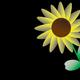 【お絵描き】花を描くのは慣れてきた。