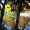 井の頭池紅葉観察