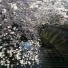 ここ何年かの春に比べたらやはり今年の花粉は多いと喉が言ってます(笑)。