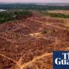 アマゾンの森林破壊が過去十年で最悪に