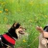 犬にはつらい夏!暑さ対策とおススメグッズ