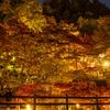 奈良県の紅葉スポット、ライトアップされた談山神社へ。駐車場は60分待ちという大渋滞だったわ。