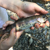 【夏を楽しもう】今年も大丹波国際虹ます釣り場に行ってきたよ