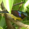 構造色の意味と仕組み【構造色を使っている美しい生物たちも紹介】