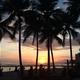 【旅行前に予習したいハワイ情報】オススメの最新グルメスポット・お土産・トロリー情報を総まとめ
