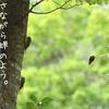 はじめまして。北野トマレです。