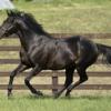 【父:サトノクラウン】2021年度キャロットクラブ募集確定馬の種牡馬別評価(13)【一口馬主】