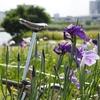 ブロンプトン号ポタ散歩 シーズンなので下町『花巡り』をしてみました (おまけで2019年の鎌倉の紫陽花寺『明月院』も)