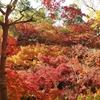 京都 東福寺の紅葉の様子