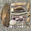 漂流物:久しぶり!遠浅な片瀬東浜で流木とフジツボとアメフラシ