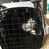 野良猫観察記⑨ 八雲くんの手術終了