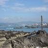 三浦半島西側へー植物観察1