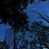 真冬の夜、凍てつく寒さに一睡もできず、富士の樹海で変わらぬ空をただ眺めていた