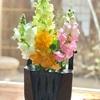 庭に咲いた春の茶花