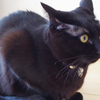 今日の黒猫モモ&白黒猫ナナの動画ー1008