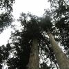 ◆1/6                 2018年も初登りは金峯山へ①…足跡に見とれる