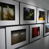 【写真展】R3.5/11~5/16_加藤俊樹「失語症」@gallery solaris