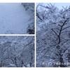 関東地方、大雪。アレがなくて慌てました。