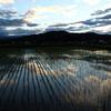 田んぼに映る夕暮れ雲