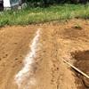 野菜づくり二年生 8 〜新しい畑にかぼちゃとうりを植えました!