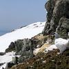 残雪期の登山と雷鳥達