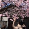 姫姉様に『はじまりの予感』がする春の下諏訪を2泊3日でマキシマムに案内しました!