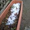 庭の雪はほぼ消えた