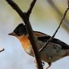 【野鳥】No.8 新潟 春の野鳥⑤