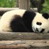 pandas DataFrameをもっと自由にJOINしよう!