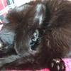 今日の黒猫モモ&白黒猫ナナの動画ー751
