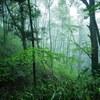 新緑の恐羅漢山を歩く