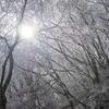 【登山】皿ヶ嶺~四国で今シーズン最後の樹氷かな~