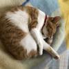 ツンデレのギャル猫