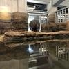 今年初めての円山動物園