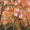 晩秋の風景を楽しむ
