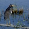 ベリーズ 自宅横の水場の野鳥たち
