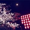 日本一だったはずの桜並木(足羽川)が劣化した件について