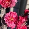 開花が続くよ✨&肥料のタイミングに注意!